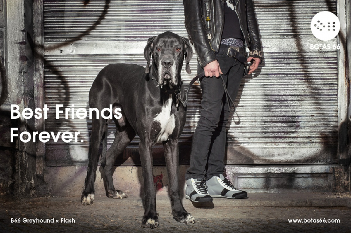 Best Friends Forever - Greyhound